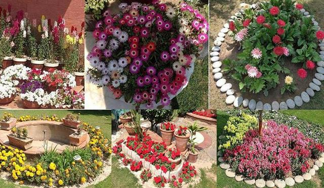 Tech Society Lahore Flower Show 2014